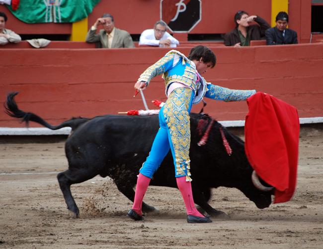 drunk amateur matadors